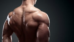 Strength & Muscle Cycle